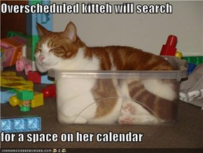 Overscheduled kitteh will search  for a space on her calendar