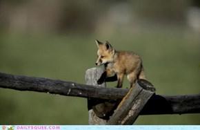 Fox Trot: Doin' it Right!