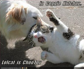 in  Goggie  Kulchur..   Lolcat  is  ChooToy