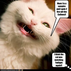 I think the cat was watching Twilight again!!