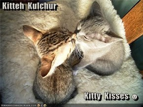 Kitteh  Kulchur  Kitty  Kisses ☻