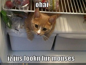 ohai  iz jus lookn fur mouses