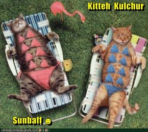 Kitteh  Kulchur         Sunbaff ☻
