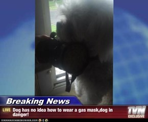 Breaking News - Dog has no idea how to wear a gas mask,dog in danger!