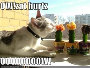 OW!zat hurtz  OOOOOOOOW!
