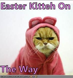 Easter Kitteh On  The Way