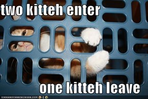 two kitteh enter  one kitteh leave