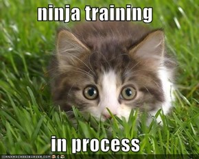 ninja training  in process