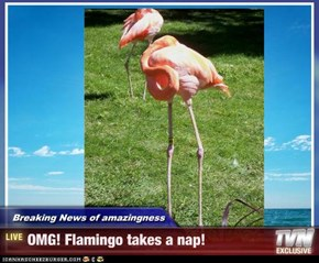 Breaking News of amazingness - OMG! Flamingo takes a nap!