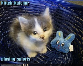 Kitteh  Kulchur   playing  splorts