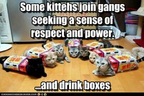 Some kittehs join gangs seeking a sense of respect and power.    ...and drink boxes