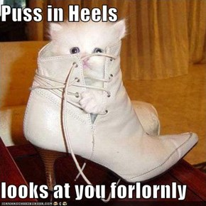 Puss in Heels  looks at you forlornly