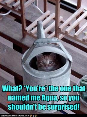 Aqua!