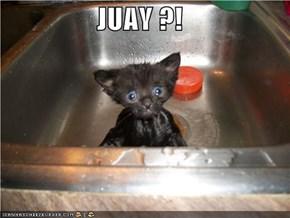 JUAY ?!