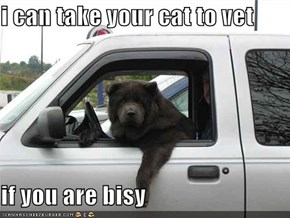 i can take your cat to vet  if you are bisy
