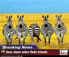Breaking News - 4eva alone zebra finds friends
