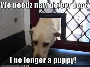 We needz new doggy door.  I no longer a puppy!