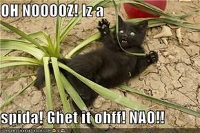 OH NOOOOZ! Iz a  spida! Ghet it ohff! NAO!!