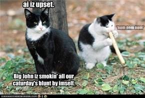 Caturday's blunt