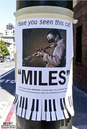 Miles Davis WIN