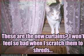 Kitteh doesn't like your taste in curtains...