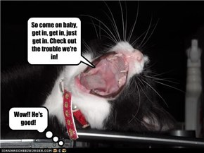 Kitty Singin Nickelback