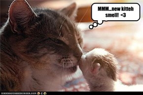 MMM...new kitteh smell!  <3