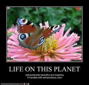 LIFE ON THIS PLANET