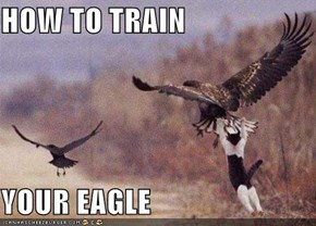 HOW TO TRAIN   YOUR EAGLE