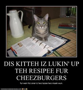 DIS KITTEH IZ LUKIN' UP TEH RESIPEE FUR CHEEZBURGERS