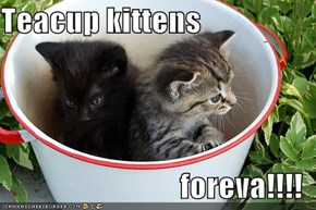 Teacup kittens  foreva!!!!