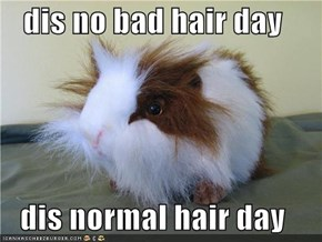 dis no bad hair day  dis normal hair day