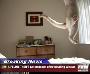 Breaking News - A FELINE THEIF? Cat escapes after stealing Wiskas