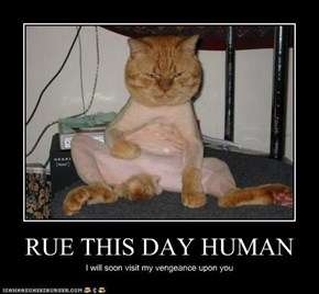 RUE THIS DAY HUMAN