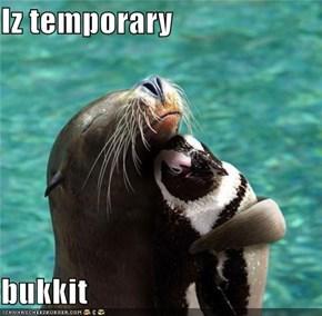 Iz temporary  bukkit
