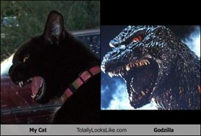 My Cat Totally Looks Like Godzilla