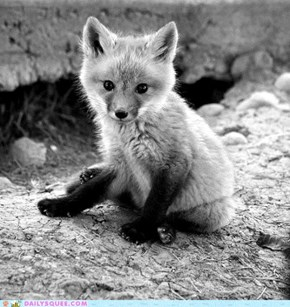 Baby Foxes, Always Kittin' Around