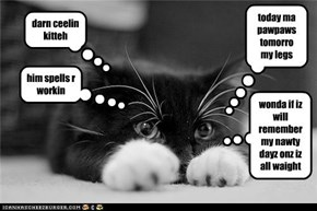 ceelin kitteh's force stronger dan basement kitteh's
