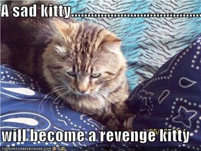 A sad kitty.............................................................................  will become a revenge kitty