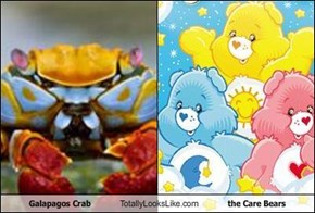 Galapagos Crab Totally Looks Like the Care Bears
