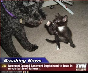 Breaking News - Basement Cat and Basement Dog to head-to-head in an epic battle of darkness.