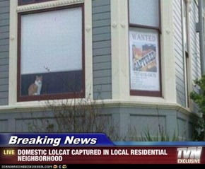 Breaking News - DOMESTIC LOLCAT CAPTURED IN LOCAL RESIDENTIAL NEIGHBORHOOD