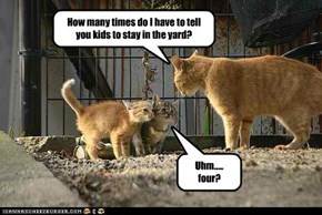 Little kitties don't understand rhetorical questions
