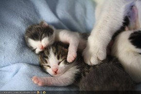 Cyoot Kittehs of teh Day: Sweet Kitten Dreams