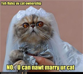Teh Rulez uv cat ownership