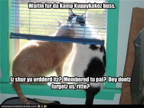 Kamp Kuppykakez buss iz laet.