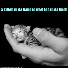 take one handful of kitteh...