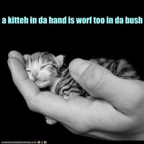 take one handful of kitteh...