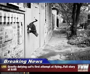 Breaking News - Gravity defying cat's first attempt at flying..Full story at 6:00