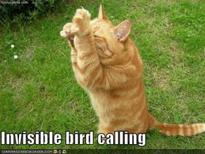 Invisible bird calling